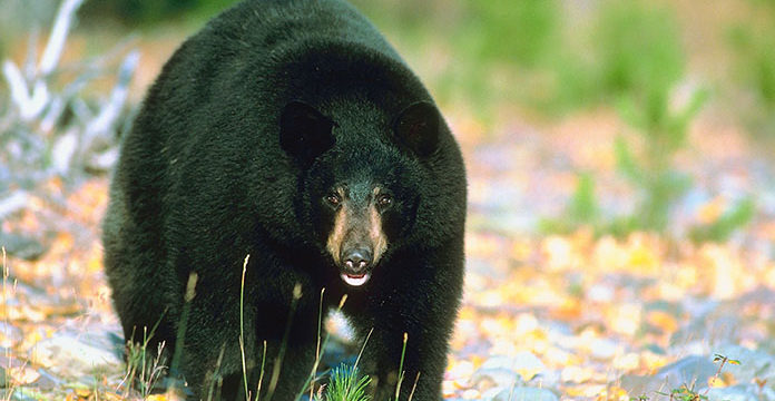 10 Tips for Hiking in Bear Country